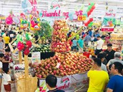 "Central Group Vietnam promeut le label ""fruit du dragon de Binh Thuan"""