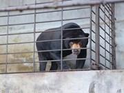 Publication d'un court métrage appelant la communauté à ne pas utiliser la bile d'ours