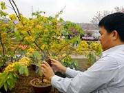 Lancement de la Fête des fleurs de cerisier et d'abricotier jaunes Yen Tu 2019