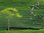 Le Vietnam, une des meilleures destinations pour les vacanciers de plus de 50 ans