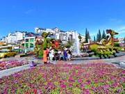 Da Lat, royaume des fleurs destinés à l'exportation