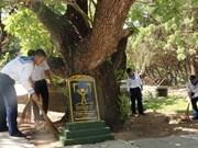 Des arbres patrimoniaux nationaux sur l'archipel de Truong Sa
