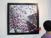 Les peintures de l'amour d'un couple vietnamien de Washington DC