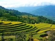 Explorer les rizières en terrasse de Hoang Su Phi