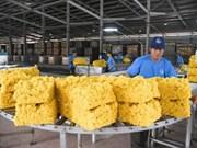 Janvier : exportations nationales de caoutchouc en hausse tant en volume qu'en valeur