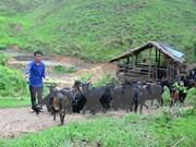 Quang Ninh accélère la réduction de la pauvreté dans les zones montagneuses
