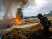 Feux de forêt: près de 19.000 points chauds localisés en Asie du Sud-Est et en PNG