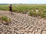 La Thaïlande propose un nouveau plan comme alternative à son système de garantie des prix du riz