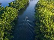 La forêt de cocotiers d'eau à la plage de My Khe