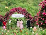 La vallée de roses à Sapa reconnue comme la plus grande du Vietnam