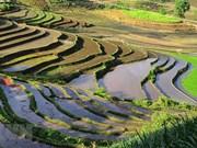 Saison de la mise en eau des rizières à Y Ty: des escaliers vers le paradis