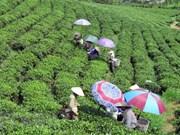 La Thaïlande promeut la coopération avec la province de Thai Nguyen