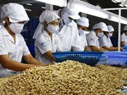 Le secteur de la noix de cajou cherche à accroître la valeur des exportations