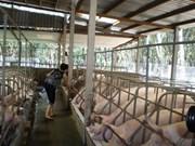 Hô Chi Minh-Ville: hausse de 6% de la valeur de production agricole au 1er semestre