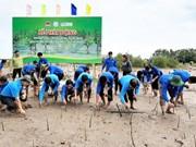 Cà Mau: planter les mangoves pour protéger les côtes