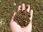 L'EVFTA ouvre grand la porte aux produits agricoles vietnamiens