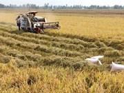 Biomasse : Cân Tho et l'américain BESI coopèrent