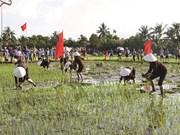 Une fête de descente aux champs pour aider l'agriculture à fleurir