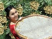 Hung Yên, pays des longanes