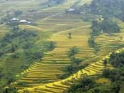 Dans le Nord, le  tourisme durable prend de l'altitude à Hoàng Su Phi