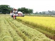 Une variété de riz du Vietnam au top 3 mondial en 2017