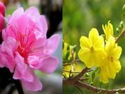 Des fleurs et plantes pour accueillir le printemps en beauté
