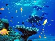 Près de 12.000 espèces marines recensées au Vietnam