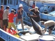 Pêche INN : Le Vietnam s'efforce de satisfaire les critères de la CE