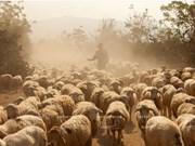 Comment Ninh Thuân développe sa propre résilience agricole