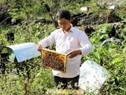 Hà Giang mise sur le maraîchage bio et l'apiculture