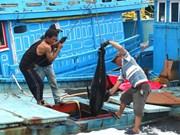 Le Vietnam progresse dans la lutte contre la pêche INN
