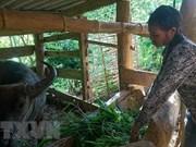 Thua Thiên-Huê accorde un fonds de 11 millions d'USD pour soutenir les habitants montagneux