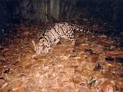 Renforcer la coopération internationale pour conserver les espèces sauvages menacées