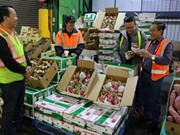 La blockchain pour la traçabilité des pitayas d'exportation vers l'Australie