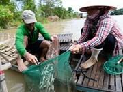 L'arrivée des vives-eaux, une manne pour les pêcheurs
