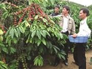Le café, porteur de richesse sur le plateau Di Linh