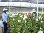 Orchidées et bonsaïs auront leurs festivals à Hô Chi Minh-Ville