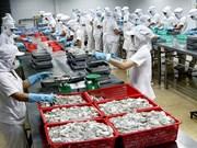 Les céphalopodes du Vietnam exportés dans 61 pays et territoires
