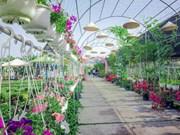 Dông Thap : de nombreuses activités prévues au Festival des fleurs printanières 2019