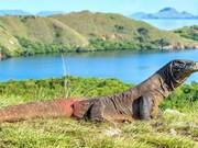 L'Indonésie va fermer temporairement l'île de Komodo