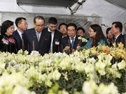 Une délégation de la RPDC étudie le modèle de plantation d'orchidées à Dan Phuong