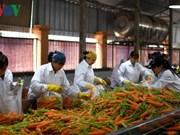 Agriculture: coopération entre les producteurs et les transformateurs