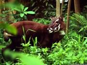 Découverte de bisons et saolas au parc national de Phong Nha-Ke Bang