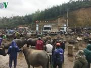 Trà Linh, le plus grand marché aux bestiaux du Nord