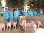 FAO: Le Vietnam devrait lancer une alerte à la PPA