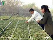 L'agriculture intelligente donne du tonus aux cultivateurs à Gia Lai