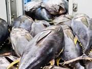 Forte hausse des exportations de thon vers la Chine