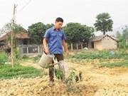 Un jeune Thaï fait fortune grâce à l'agriculture à Diên Biên