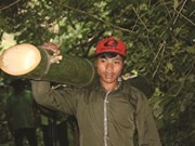 Un village montagnard et ses bambous géants à Quang Nam