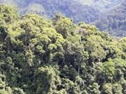 Quang Tri veut tripler sa superficie forestière FSC en dix ans